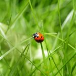 Hotels-a-insectes-coccinnelle