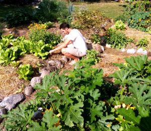 Jardinier-nature-entretien