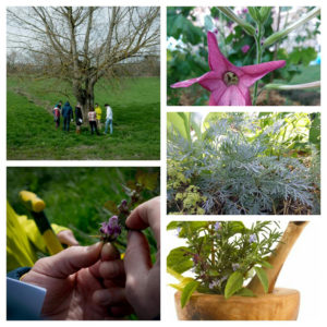 atelier-stages-annecy-plantes