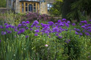 jardins paysage alliums et aromatiques
