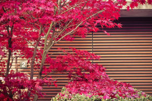 terrasse jardin japonais annecy erable