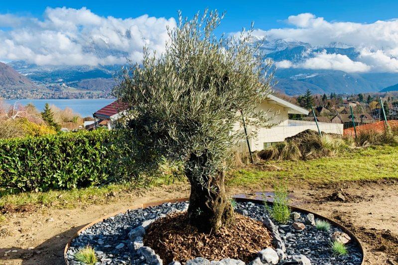 olivier-plantation-annecy-sevrier